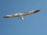View photo Seagull